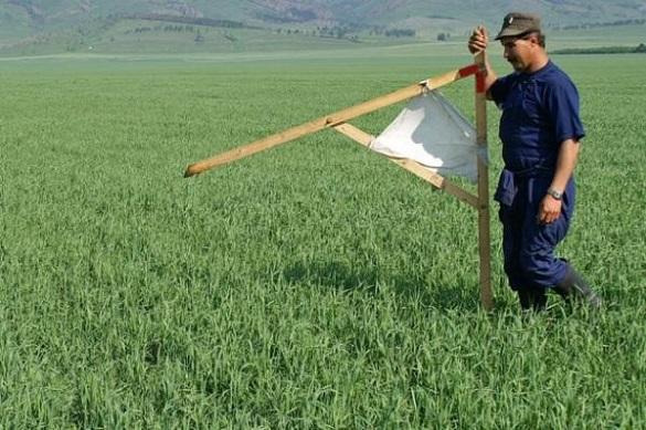 Москвичи решили освоить дальневосточные гектары. 401000.jpeg