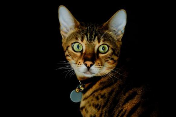 Кошачья агрессия: причины и способы борьбы. 397002.jpeg