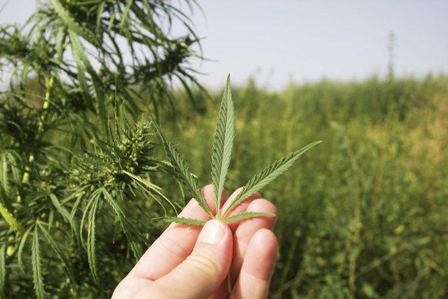 В Грузии прошли акции за легализацию марихуаны.
