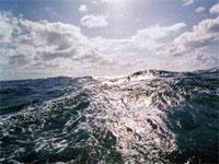 В Тихом океане нашли многокилометровую свалку