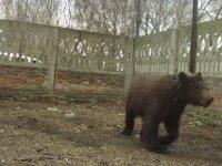 В Луганске медведь снял скальп 47-летней женщине. 236010.jpeg