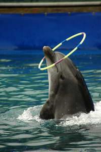 Дельфины умеют заглядывать в будущее