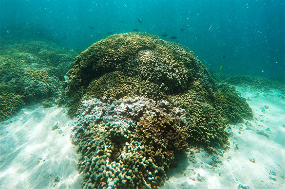 Большой барьерный риф убивает потепление Мирового океана