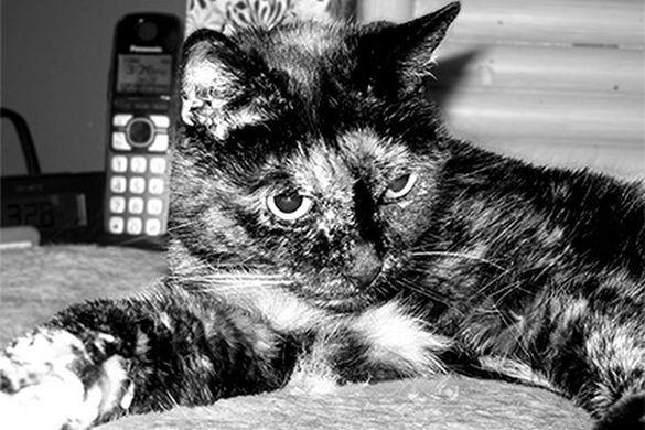 В Калифорнии скончалась самая старая кошка в мире.