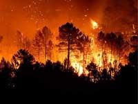 Уникальный лес в Приморье уничтожен огнем