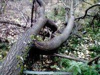 В центре столицы на мать с ребенком упало дерево. 236023.jpeg