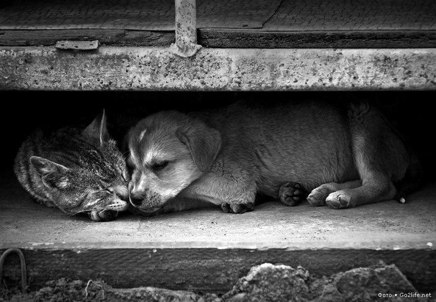 Украинцев обложат налогами на кошек и собак. Бездомных станет еще больше. Украинцев обложат налогами на кошек и собак. Бездомных станет ещ