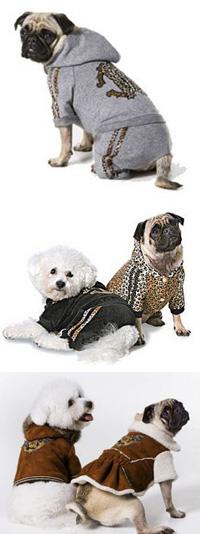 На днях Роберто Кавалли представил дебютную коллекцию собачьей