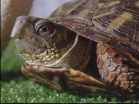 Черепаха выжила после 30 лет без воды и пищи. 280027.jpeg