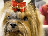 Приставы арестовали породистых собак за долги. 252028.jpeg