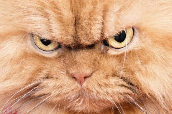 Ни слова хозяину! Кошачьи секреты. 397028.jpeg