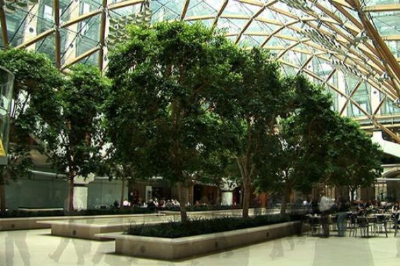 Как комнатные растения влияют на наше здоровье?. 395029.jpeg