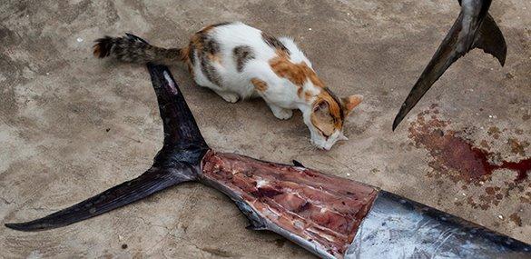 Ученые объяснили, почему кошки привередливы к пище.