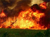 Лесной пожар парализовал железную дорогу под Воронежом
