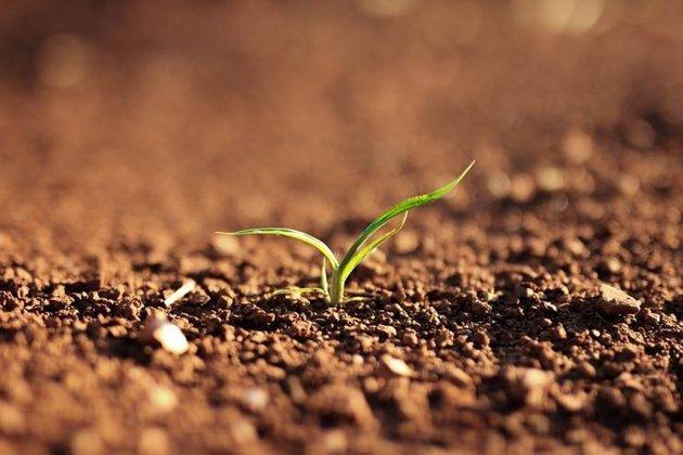 Как определить состав почвы на участке?. Почва
