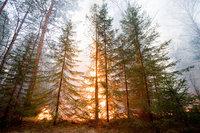 Площадь лесных пожаров в РФ сократилась вдвое за сутки. fires