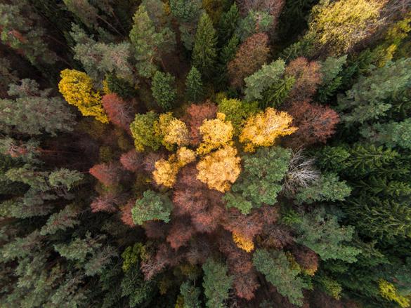 Листья являются поставщиком веселящего газа в атмосферу Земли
