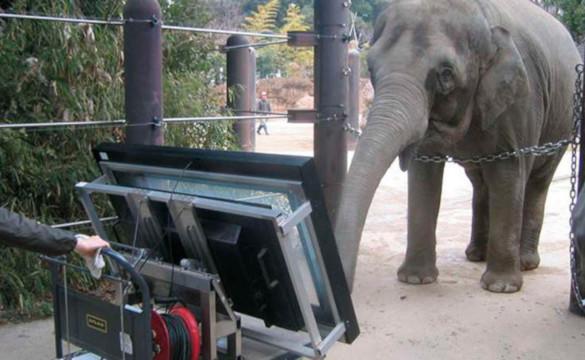 В Японии живет слониха с математическими способностями. 394035.jpeg