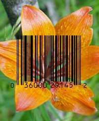 Штрих-код для тараканов и роз