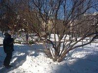 Прогнозы: снежно и ветрено будет в Москве. 257784.jpeg