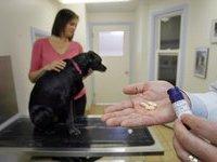 Китаец судится с ветеринаром из-за проведенного собаке фэйслифтинга. 281043.jpeg