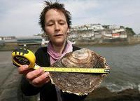 У берегов Британии поймана гигантская устрица