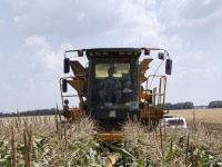 Комбайн смолотил украинца, кравшего кукурузу. 248047.jpeg
