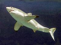 Девочка кулаками отбилась от акулы-людоеда