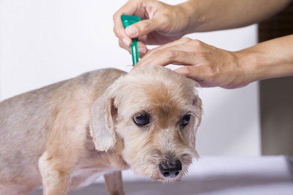 Как защитить собаку от клещей. Борьба с клещами у собак