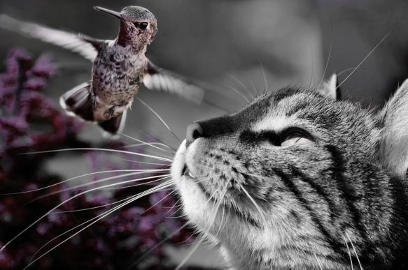 Кошка и птица: как содержать вместе. 401049.jpeg