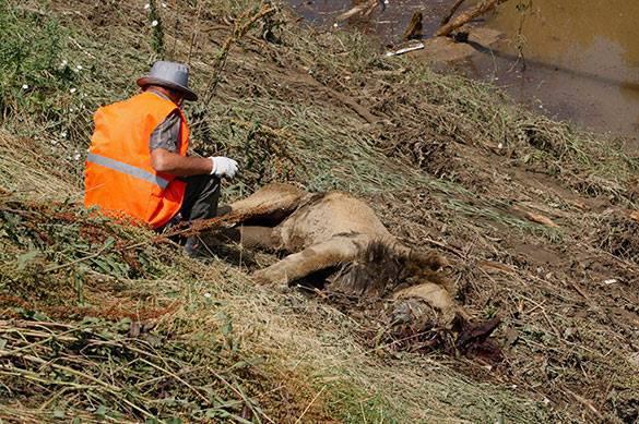 В Тбилиси так и не нашли тигра и гиену. Жителей призывают к осторожности. В Тбилиси не нашли тигра и гиену