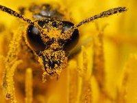 Пчелы ворвались в буддийский храм: шестеро монахов в коме. 262053.jpeg