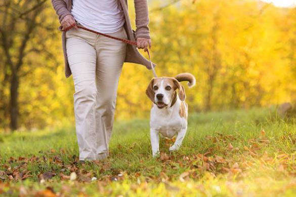 Ученые объяснили эмоциональную связь собак с хозяевами. 390053.jpeg