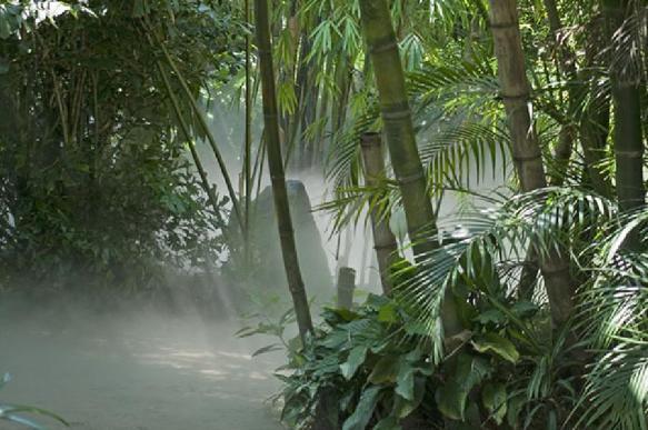 В Австралии умер русский отшельник, который 60 лет провел в джунглях. 391053.jpeg