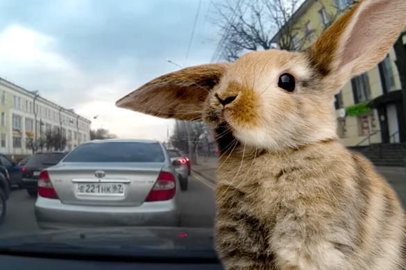 На Смоленск напал огромный заяц. ВИДЕО