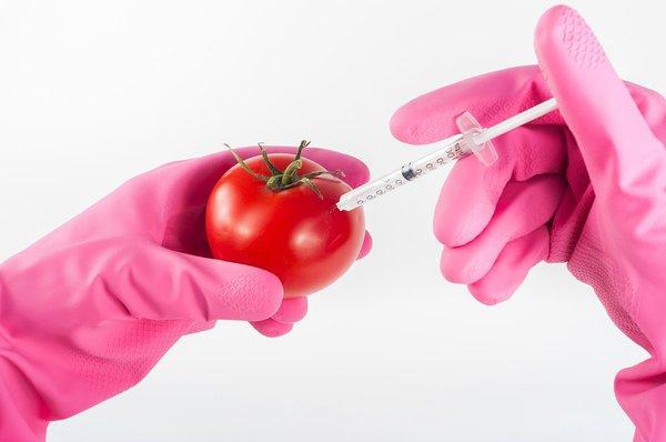Генетически модифицированные организмы: за и против. Генетически модифицированные организмы: за и против
