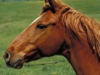 Накануне соревнований по поло скончались более 20 лошадей
