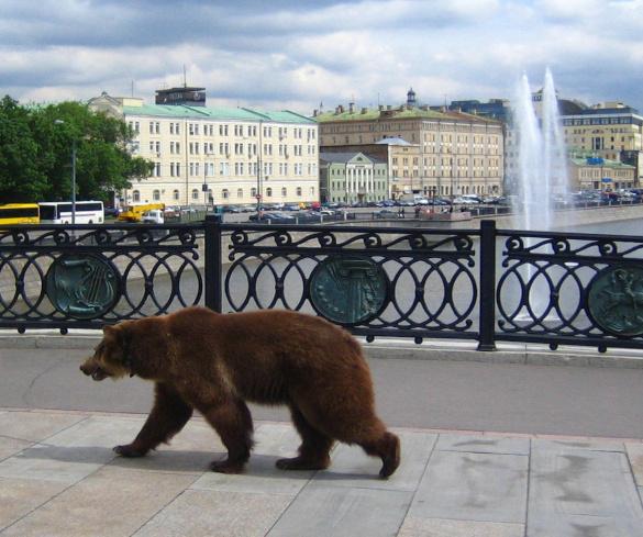 Медведи заставят людей убирать мусор. 394055.jpeg