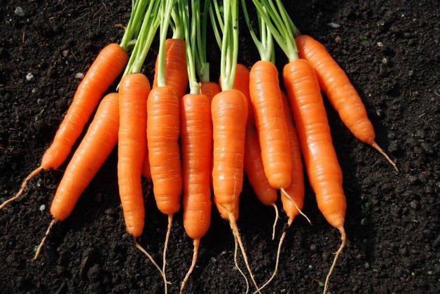 Какие овощи можно  высадить на зиму в открытый грунт. Морковь