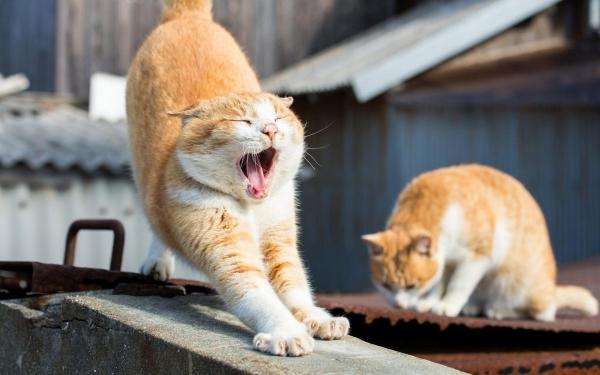 Почему зевота заразительна. Почему зевота заразительна