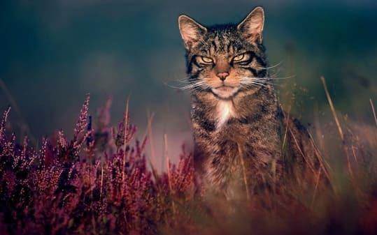 Поведение кошек: секреты и методы воспитания. Ласковая кошка