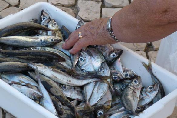 Названы главные полезные свойства рыбы. Названы главные полезные свойства рыбы