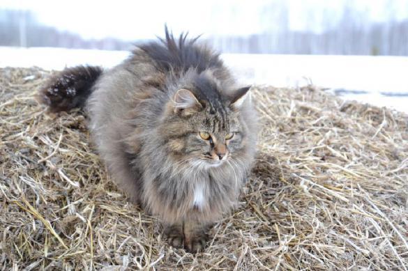 Правила для кошек, которые не гуляют сами по себе. 398064.jpeg