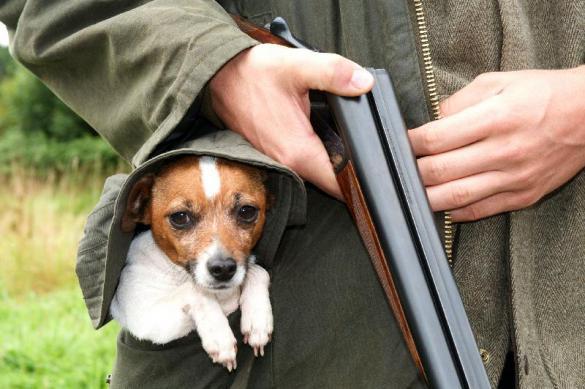 Собака расстреляла провинциального охотника из двустволки. 382065.jpeg
