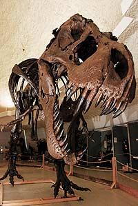 Аллигаторы открыли тайну динозавров
