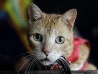 Выжившая в катастрофе Ан-24 кошка вернулась к хозяйке. cat