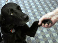 Собаки-актеры получат собственную премию