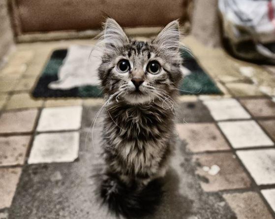 Сколько стоит здоровье вашего домашнего любимца?. Бездомный котенок