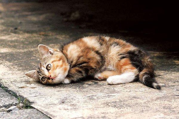 Сколько стоит здоровье вашего домашнего любимца?. стерилизация кошки