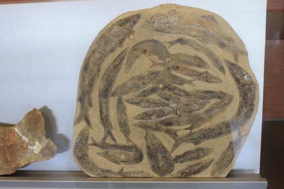 Кипр: Морской музей из Святого леса. Окаменелости древних рыб